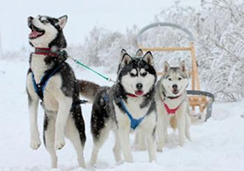 Для гостей арендующих наши квартиры посуточно: Зимний отдых по-русски!