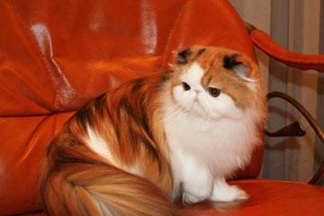 Информация для арендующих квартиры посуточно от HTH24 - Выставка кошек Международный кэт-фестиваль SHOW CFA в Ленэкспо